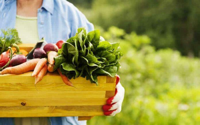 Alimentos Orgânicos e Não Orgânicos – Conheça as Diferenças e Benefícios